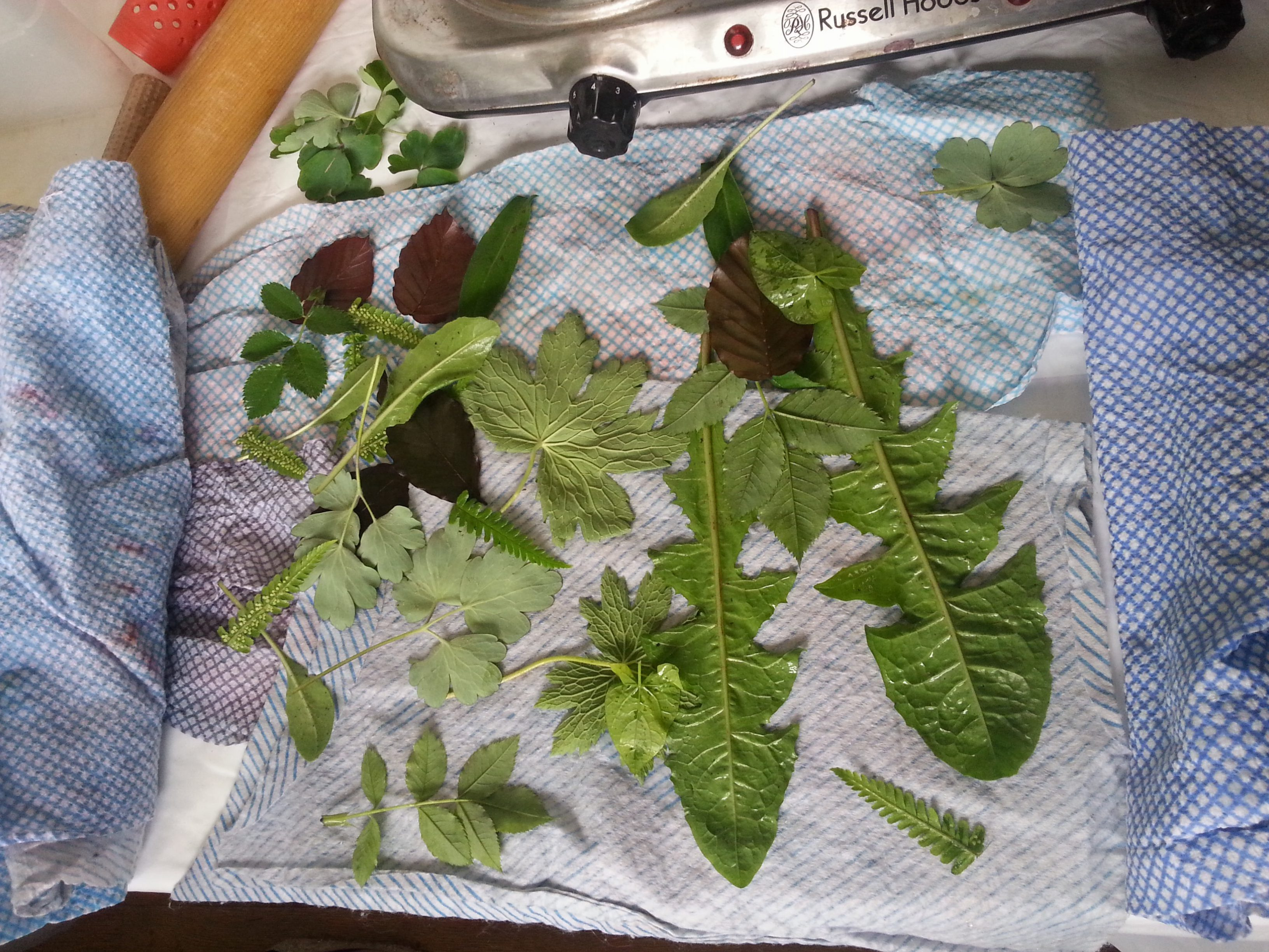 Just Add Leaves - An easy to follow pic-torial to accompany our eco-printing and bundling kit